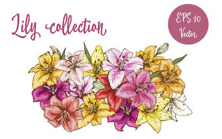 Flowers set of lily buds. Illustration