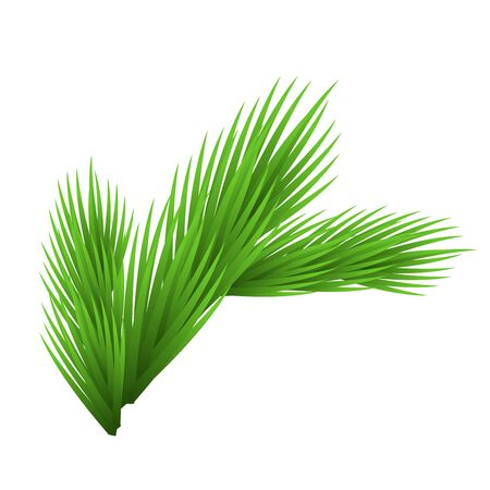 Green lush spruce branch. Isolated on white vector illustration.