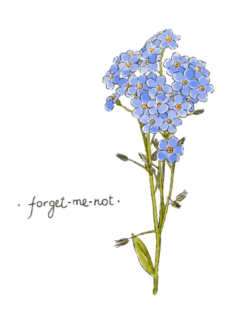 Wild flower forget-me-not hand drawn in color. Herbal vector illustration