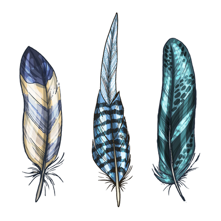 Colorful detailed bird feathers, isolated on white background. Vector illustration