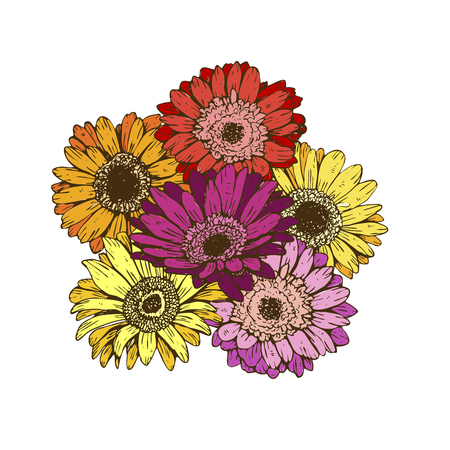 Bouquet of daisies flower on white background. Vector set of blooming floral for wedding invitations and greeting card design Çizim