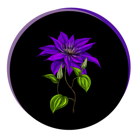 Beautiful clematis flower in a black circle. Floral vector illustration.