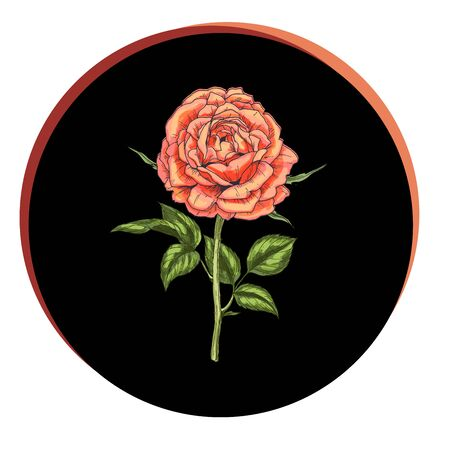 Beautiful rose flower in a black circle. Floral vector
