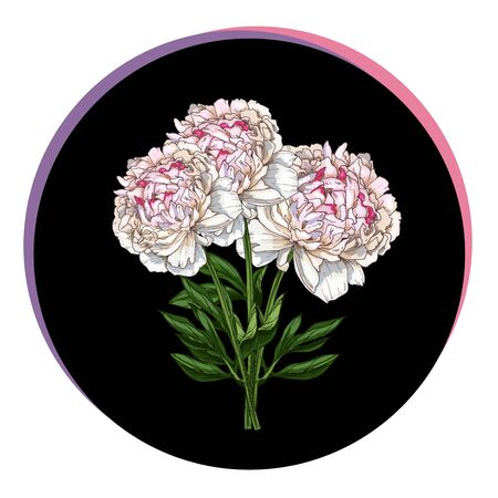 Three beautiful peony flower in a black circle. Floral vector illustration.