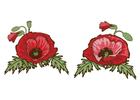 Hand drawn red poppies isolated on white background. Buds and flowers. Botanical vector. Floral elements for your design