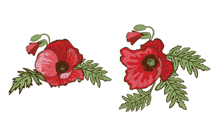 Hand drawn red poppies isolated on white background. Buds and flowers. Botanical vector. Floral elements for your design.