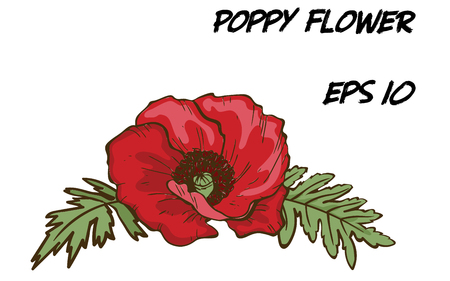 Hand-drawn illustration of red poppy flower isolated on white background. A large bud with green leaves. Botanical floral elements for your design. Stock fotó - 100910909