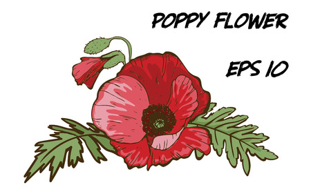 Hand-drawn illustration of red poppy flower isolated on white background. A large bud with green leaves. Botanical floral elements for your design.