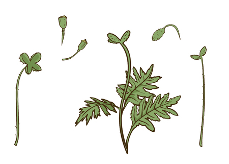 Poppy parts set. Vector isolated leaves and stems. Floral botanical illustration for design decor or holiday greetings template