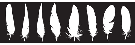 Ser of detailed feather silhouettes. Laconic and stylish illustration. Monochrome vector