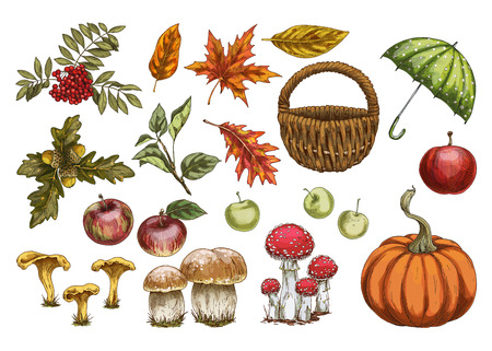 Set of vector in autumn style. Leaves, pine cones, acorns and berries.