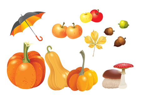 Set of autumn objects. Pumpkins different types, mushrooms, umbrella, apples, acorns and leaf. Vector illustration collection