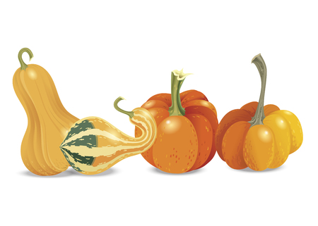Four different orange pumpkin isolated on white background. Vector autumn collection. Garden vegetables harvest. Halloween theme