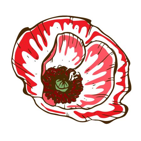 Belle fleur de pavot. Illustration du gros bourgeon de pavot isolé sur fond blanc. Vecteur dessiné à la main. Collection florale nature Vecteurs