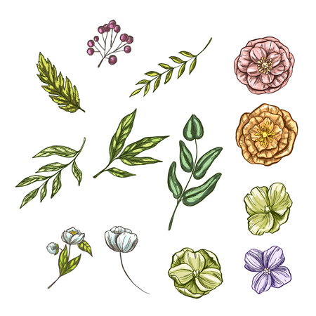 Set of floral and plant items isolated on white background. Vintage elements for invitations, greeting cards, covers and other items. Vector illustration Illusztráció