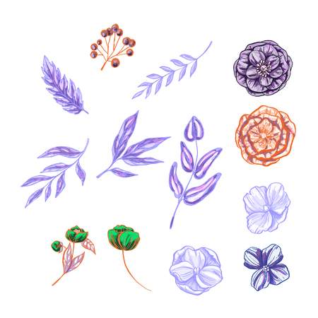 Set of floral and plant items isolated on white background. Vintage elements for invitations, greeting cards, covers and other items. Vector illustration Illustration