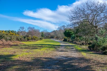 A path through heathland in winter sun