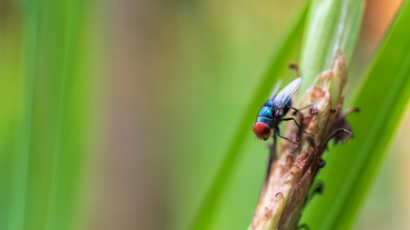 Closeup Red eyes fly on a stick Animal and Wildlife Imagens