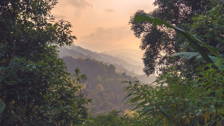 Beautiful panoromic view of misty rain forest background