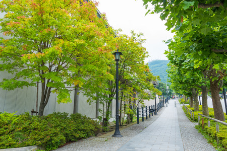walk path: clean green walk path in japan city