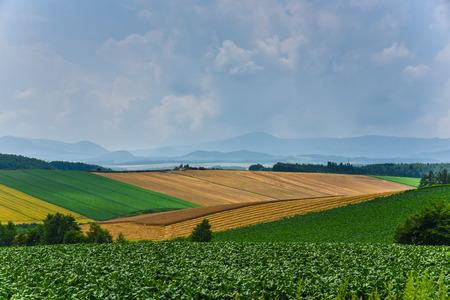 biei: biei agriculture scene in summer