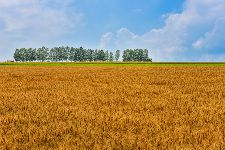 famous place: biei famous place mild seven and wheat field in summer