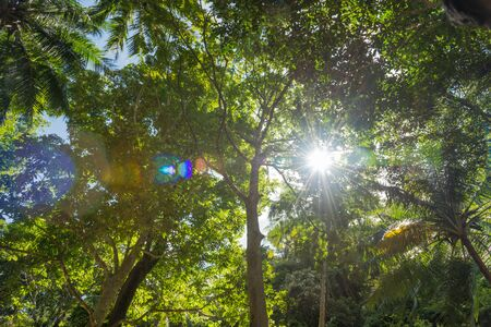 sun flare in green tropical forest