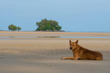 sleepy dog on beach in clear and blue sky
