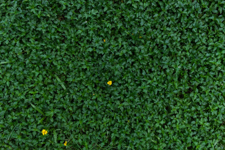 yard stick: Green meadow background