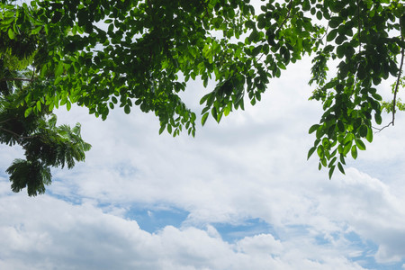 under the tree: beautiful sky looking from under tree Stock Photo