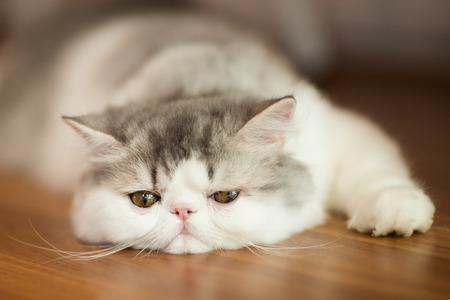 Pretty cat on floor
