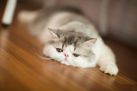 Pretty cat on floor photo