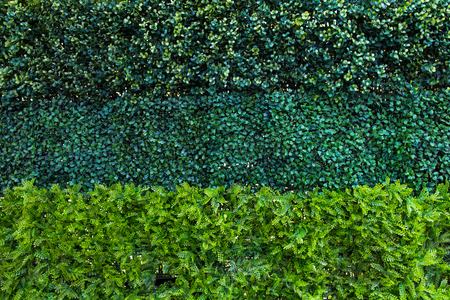Green leafs Wand Standard-Bild - 30493038