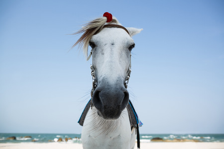 White horse on Beach , Thailand photo