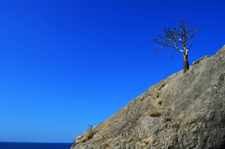 nude outdoors: lonely dry tree on the rock near the sea shore Stock Photo