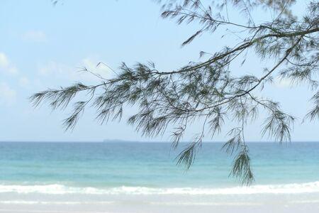 Sea Oak on the beach.