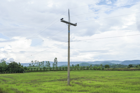 wood pillars: Old electric pole in countryside.