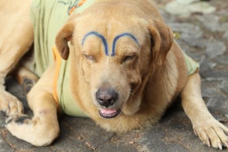 pretty dog Stock Photo - 17288577