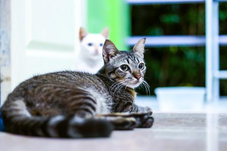 Thai Cat Banco de Imagens