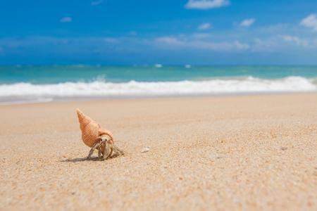 黄金の砂のビーチの上を歩くヤドカリ