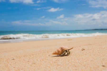 은빛 모래 해변을 걷고 은둔자 게 스톡 콘텐츠