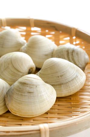 hard: Hard clam