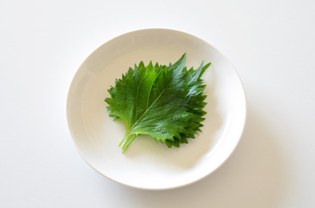 large: Large leaf Stock Photo