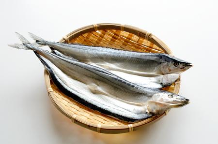 Pacific saury fish 版權商用圖片