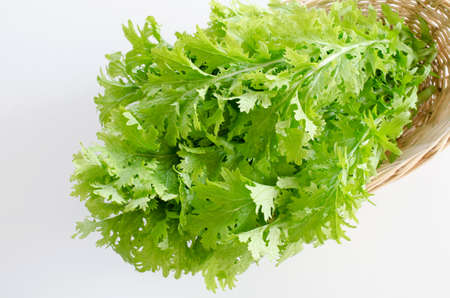 wasabi: Wasabi vegetables Stock Photo