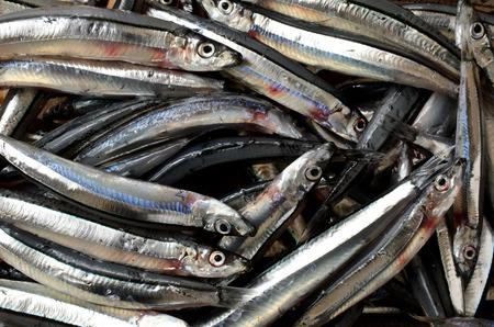 Kibinago. japanese food, fresh fish. Silver-stripe Round Herring