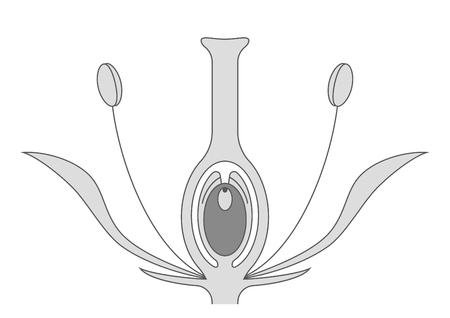 血管精子への図示ガイド。断面図図図。
