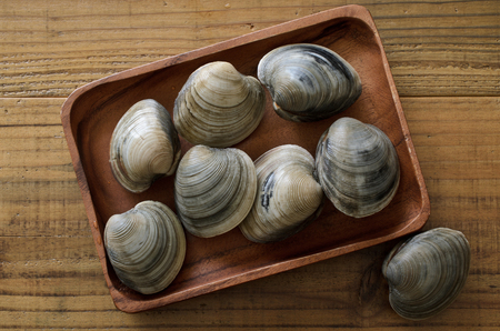 Hard clam 版權商用圖片 - 112630018