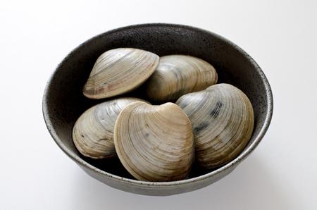 Hard clam