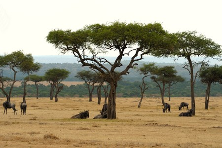 the beautiful plains of the masai reserve in kenya africa Stock Photo